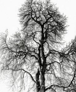 Erik Brede Photography - Winter Tree