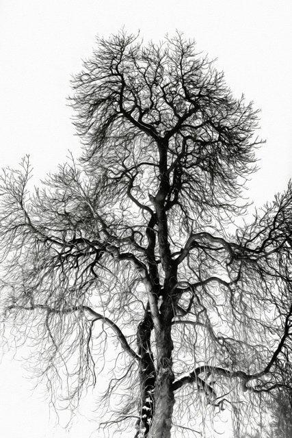 Erik Brede Photography - Winter Tree