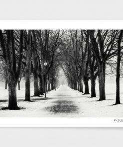 Erik Brede Photography - The Park