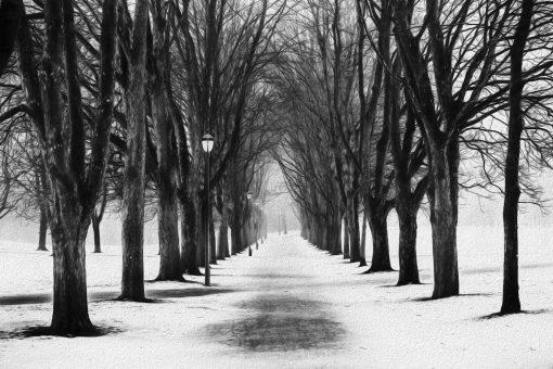 Erik Brede Photography - The Park