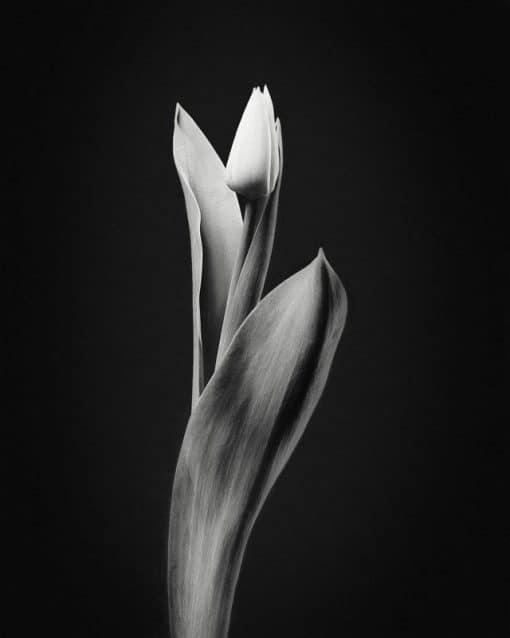 Erik Brede Photography - Simplicity