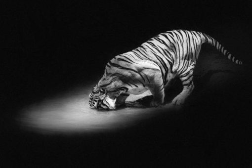 Erik Brede Photography - Thirsty
