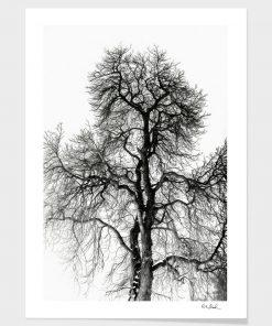 Erik Brede Photography - Naked Tree Part 2