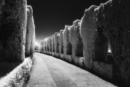 Erik Brede Photography - Alhambra Part 2