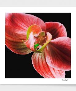 Colorful Orchidee - Erik Brede Photography
