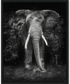 elephant frame 1of1 - Erik Brede