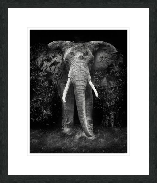The Disappearance of the Elephant - Erik Brede